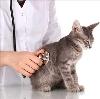 Ветеринарные клиники в Верхнем Авзяне